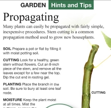 National Ledger - Garden Tips - Propagating Plants, A Greener View